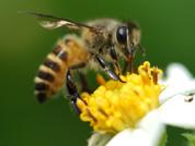 Bienenprodukte